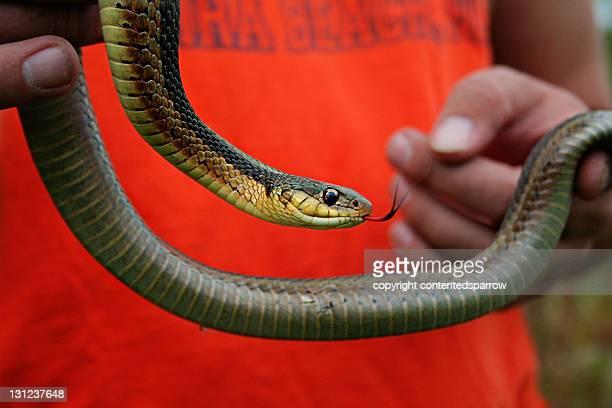 Huge garter snake