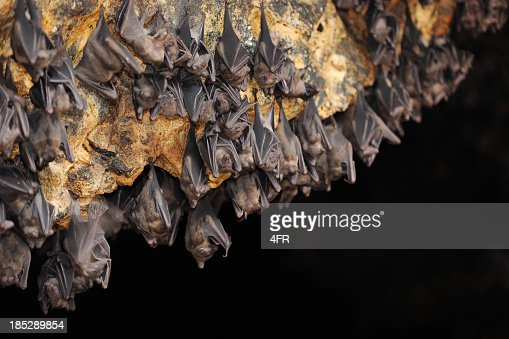 Huge Group of Bats in a Cave (XXXL)