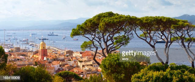 Huge Pine Trees above St. Tropez at the Cote D'Azur