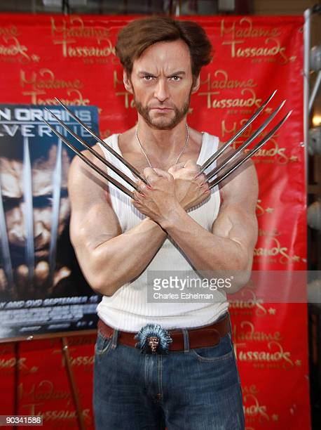 Hugh Jackman's 'Wolverine' Wax Figure at Madame Tussauds on September 4 2009 in New York City