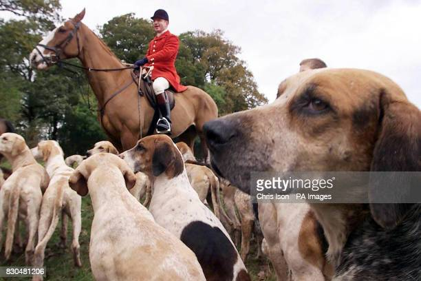 Hugo Busby Master of the Portman Hunt in Dorset gets the new fox hunting season underway at Manston near Blandford Forum The government will shortly...