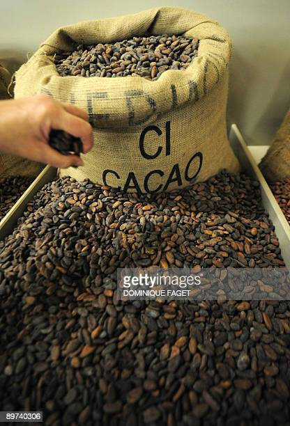 'Swiss look to heatresistant lowcalorie happy chocolates' A worker holds up a handful of cocoa beans on July 17 2009 in Lebbeke near Brussels at the...