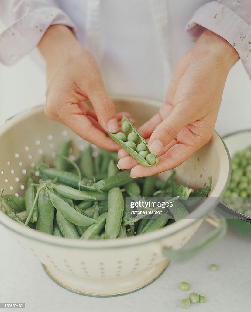 Hulling peas in a colander. : Foto de stock