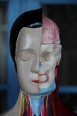 Human anatomy mannequins are displayed on April 23 2014 in Depok West Java Indonesia The mannequins are made from fiberglass and will be used in...