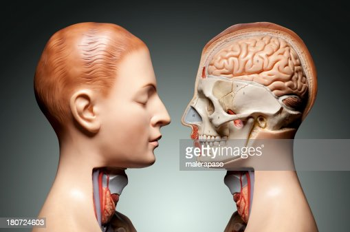 Modelo de anatomia humana