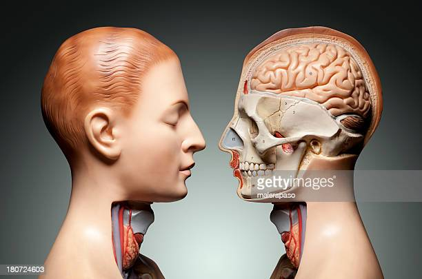 Anatomía humana modelo