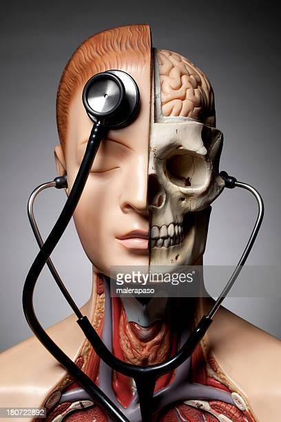Modelo de anatomia humana com Estetoscópio