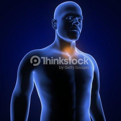 Human Anatomy Neck Pain In Red 3d Illustration Stock Photo Thinkstock