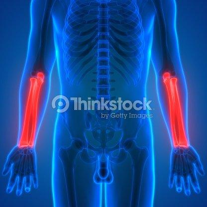Cuerpo Humano Huesos Dolores En Las Articulaciones Anatomía Foto de ...