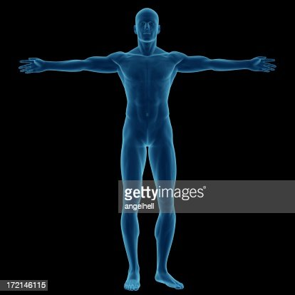 human body of a man for study stock photo | getty images, Muscles