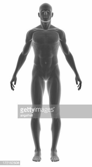 Corpo humano de um homem para estudo