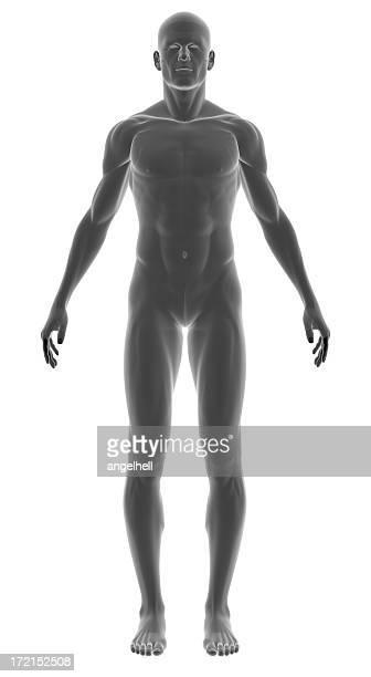 Le corps d'un homme pour étudier