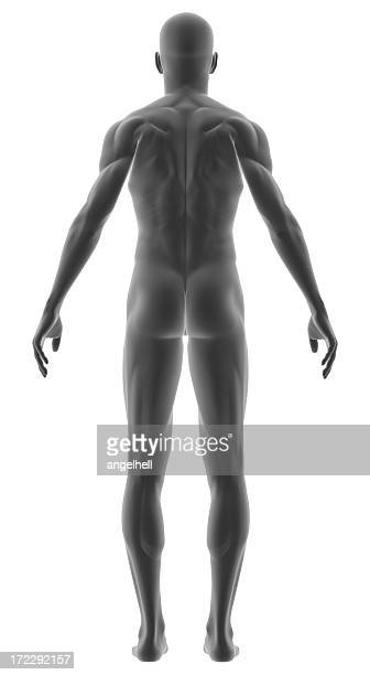 Human body of a man for study