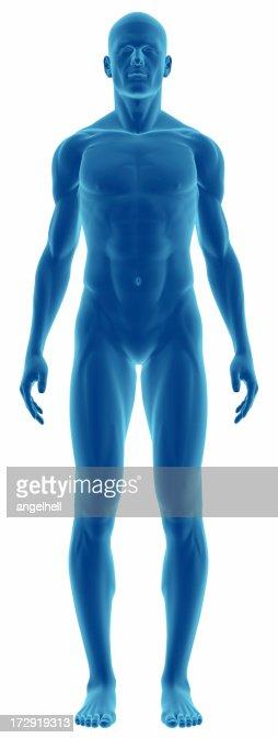 人体の研究のための男性