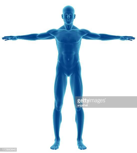 Cuerpo humano de un hombre en el estudio
