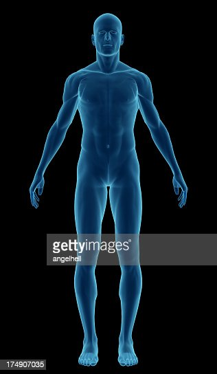 Human Body Of A Man Highlighting Your Muscles Stock Photo ...