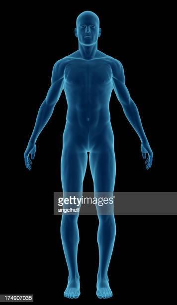 Corpo humano de um homem realce os seus músculos