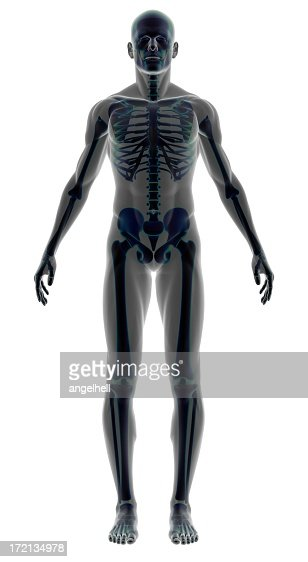 人間の体をスケルトンの男性、研究