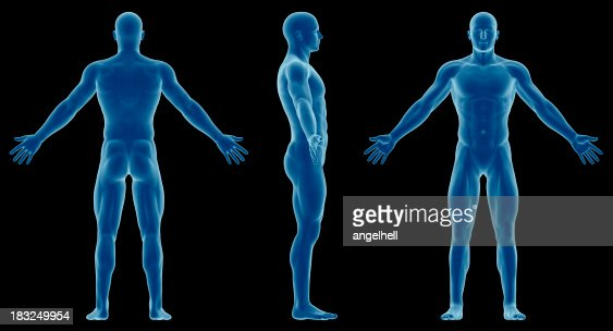 human body of a slim man for study stock photo | getty images, Muscles