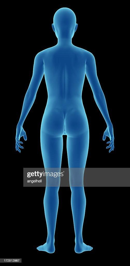 Body Image and Art - Virginia Tech