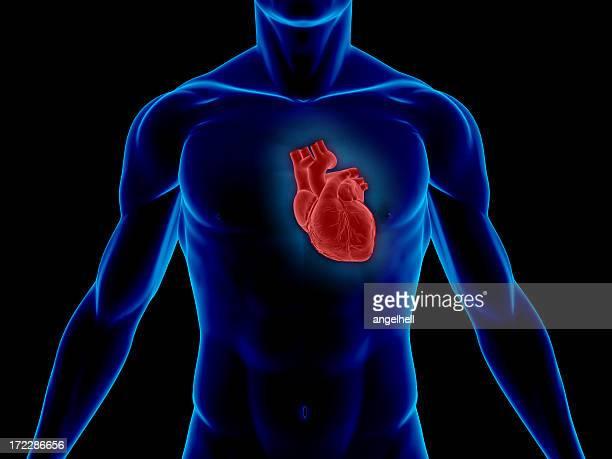Corpo humano com coração aos médicos do estudo