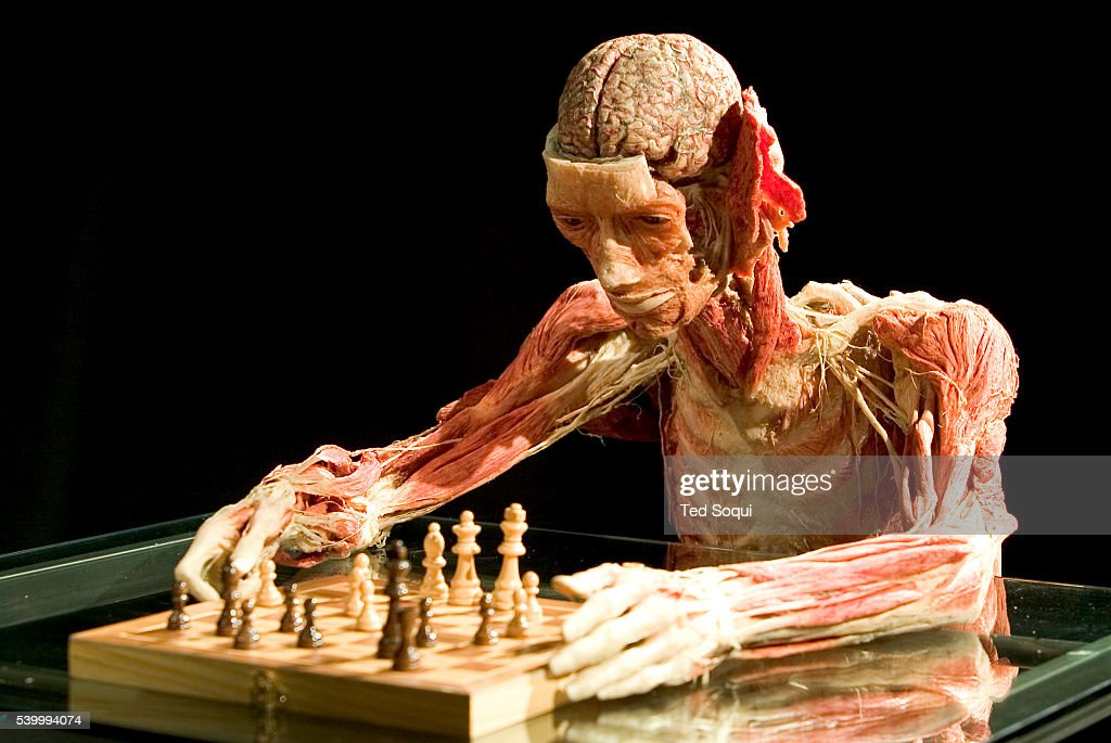 body worlds: the anatomical exhibition of real human bodies, Muscles