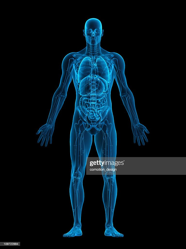 Human Body Xray Stock Photo | Getty Images