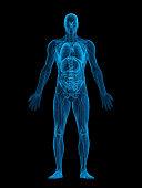 Human body X-ray