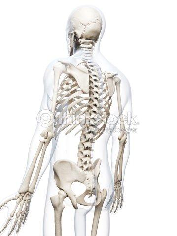 Los Huesos De Espalda Foto de stock | Thinkstock