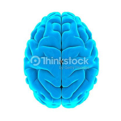 Human Brain Anatomy Isolated Stock Photo Thinkstock