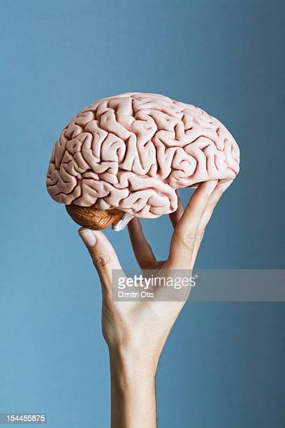 Human brain being supported by fingers of a hand
