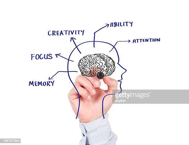 Concept de cerveau humain sur Tableau blanc