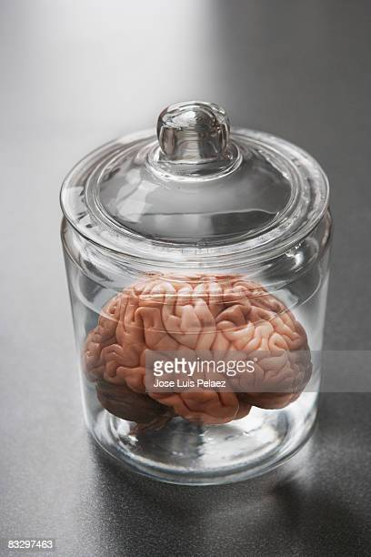 Human brain in  a specimen pot