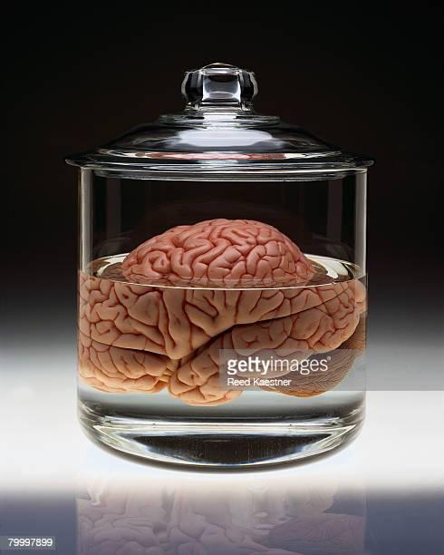 Human Brain in Specimen Jar