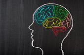 Human Brain Lobes on Blackboard