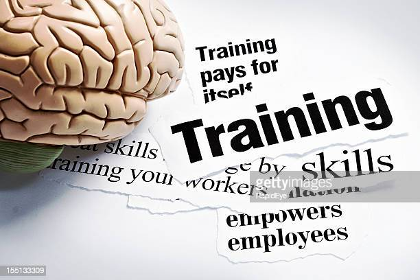 Human brain model on headlines concerning the value of training