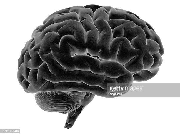 Human brain on side view