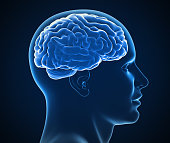 human brain x-ray 3d illustration