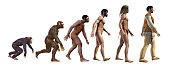 3d illustration, sequence that shows the progress of human evolution