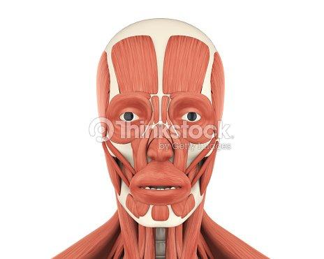 Human Facial Muscles Anatomy Stock Photo Thinkstock