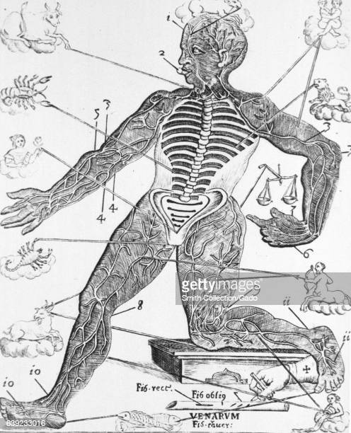 Human figure with the spines and the ribs exposed also showing the major arteries and veins of the extremities of the body and complimentary zodiac...