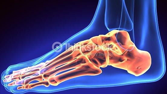 Menschlicher Fußanatomieillustration 3d Render Stock-Foto | Thinkstock