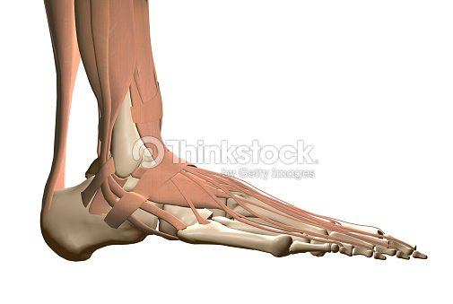Anatomie Menschlicher Fuß Stock-Foto | Thinkstock