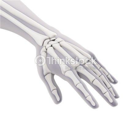 Anatomie Der Menschlichen Hand Isoliert Stock-Foto   Thinkstock