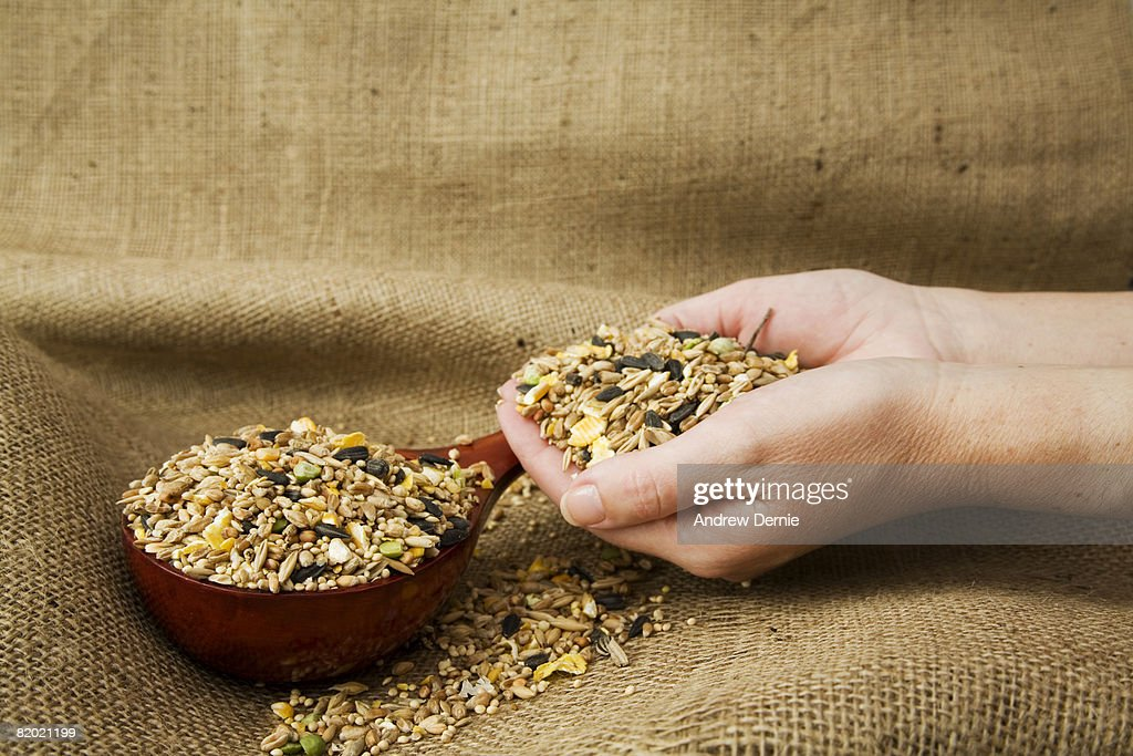 Human hand cupped full of seed next to a Chinese bowl, background of Hessian, sack cloth.