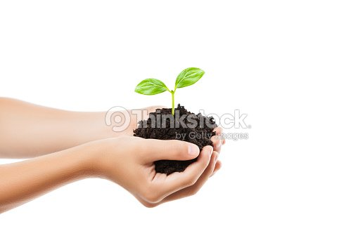 Human hand holding green sprout leaf growth at dirt soil : Stock Photo