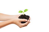 New life concept - human hand holding small green plant sprout leaf growth at dirt soil heap white isolated
