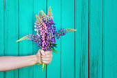 Lupines on wooden background.
