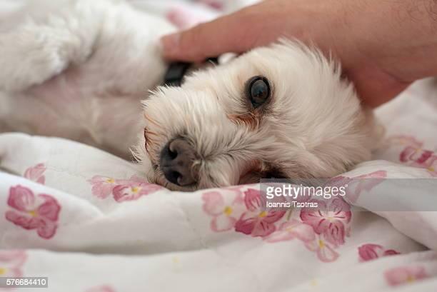 Human hand on dog's head