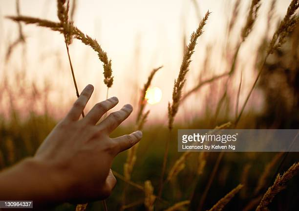 Human hand watching sun through field